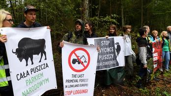 Láncfűrész az őserdőben: az utolsó európai rengeteg jövője a tét