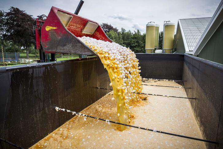 Markolóval öntik konténerbe a friss tojásokat egy gazdaságban a hollandiai Onstweddében 2017. augusztus 3-án.