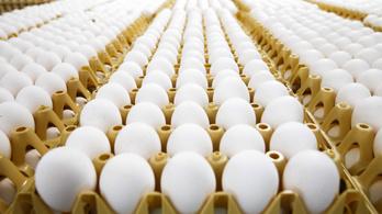 Biztosan vannak fertőzött tojások a magyar boltok polcain