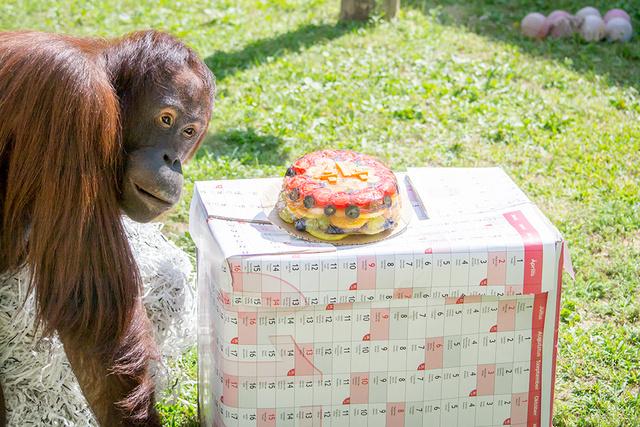 Sarita szemügyre veszi tortáját