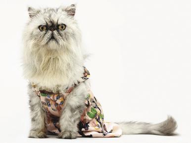 Menő vagy ciki a macskák divatnaptára?
