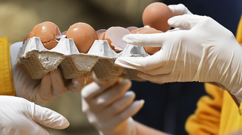 Újabb adag rovarirtós tojást talált a Nébih