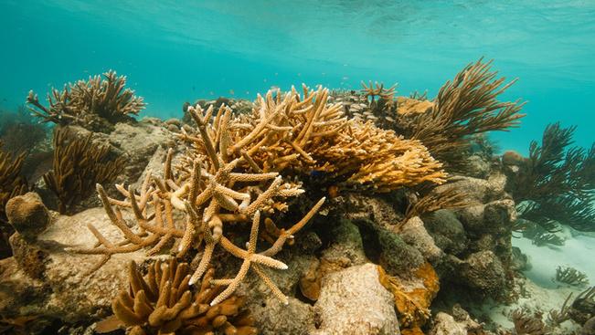 Megmenekülhet a nyugati félteke legnagyobb korallzátonya