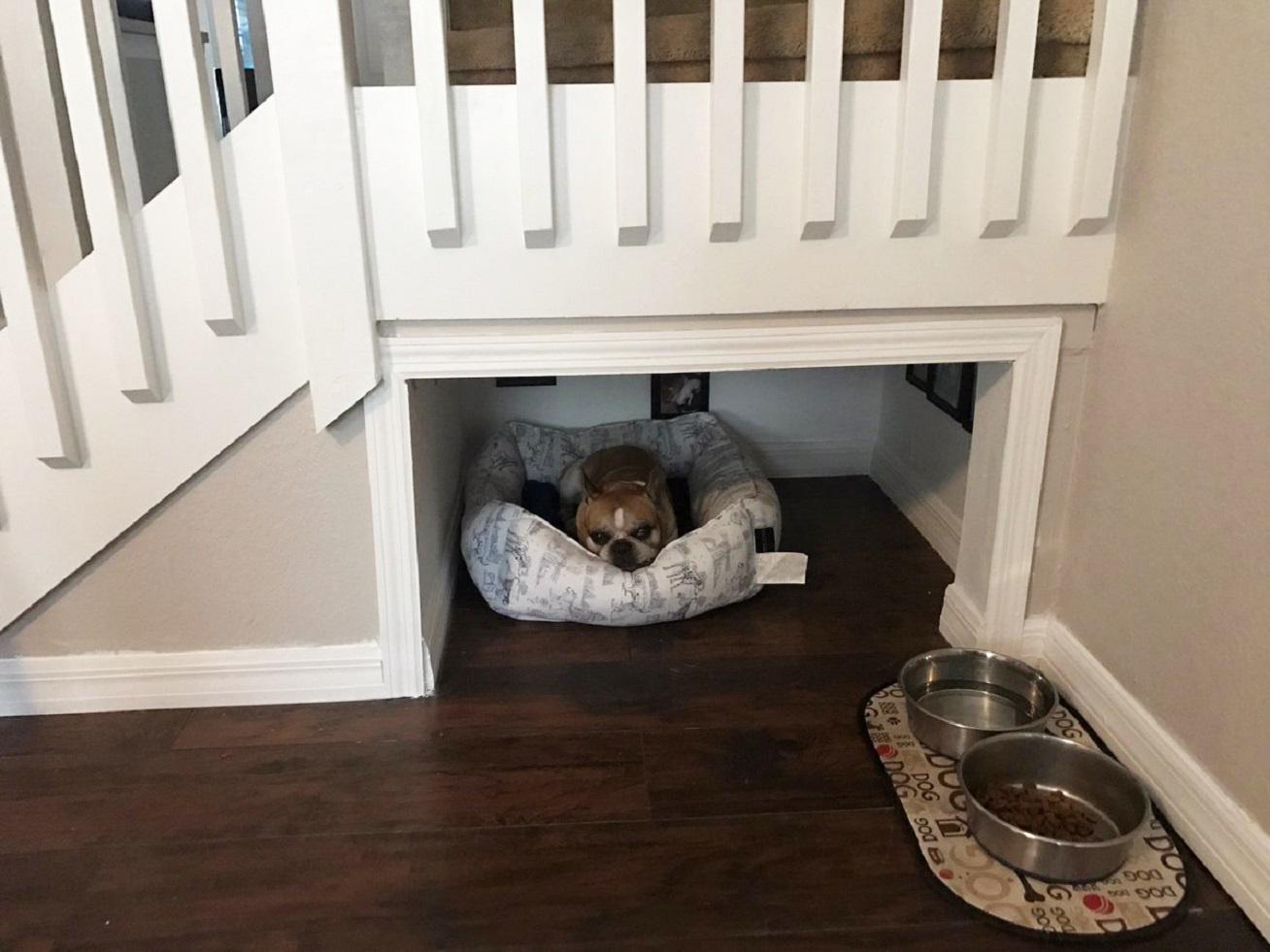 szoba-kutya-kep