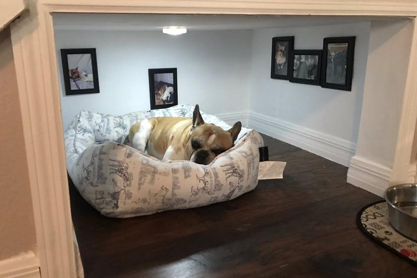 Kisebb vagyont költöttek a kutya hálószobájára: királyi luxusban élhet az állat