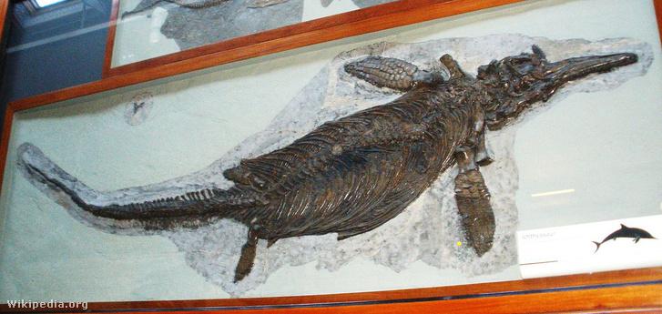 1200px-Ichthyosaurus communis 2