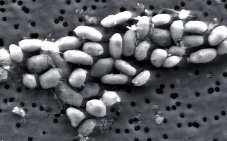 Új éleformát találtak a Földön