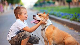Így előzheted meg, hogy megharapja a kutya a gyereked