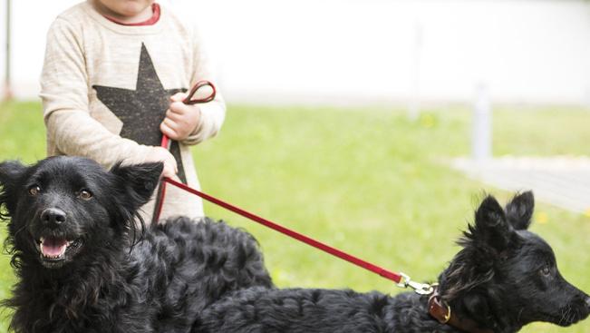 Gyerekkel megy, kutyával tér haza: mudi világtalálkozó Nyíregyházán