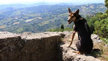 Kóbor kutya volt, akit el akartak altatni - most a világot járja és látványosságok előtt pózol