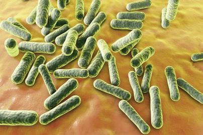 bakteriumok