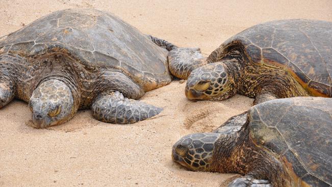 Teknősök miatt hiúsult meg egy luxusesküvő Ciprus tengerpartján