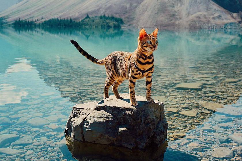 A lány, aki túrázni vitte a macskáját: már körbeutazták a fél világot