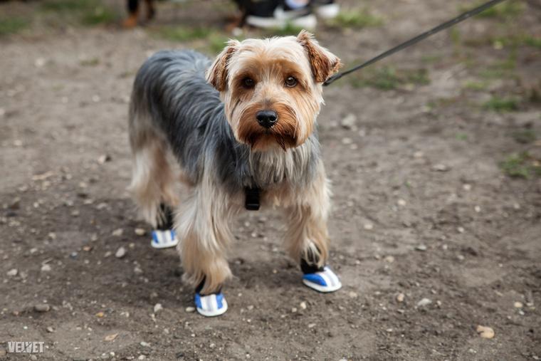 Akik esetenként ilyen tutyikkal védik a kutyalábakat.
