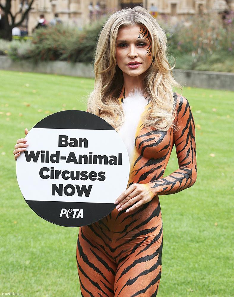 Olyan már volt, hogy állatkerti dolgozók meztelenre vetkőzve dolgoztak, hogy felhívják magukra és a pénzgyűjtésre a figyelmet, amivel megmenthetik a tigriseket.