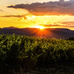 Ne csak igya: nézze meg, hogyan lesz bor a szőlőből