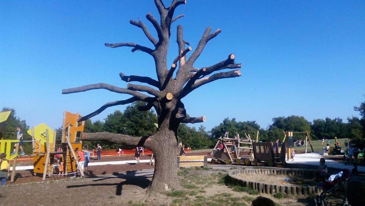 A csonkolt tölgyfa a játszótéren