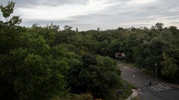 Autópálya lehet a budapesti kiserdő helyén