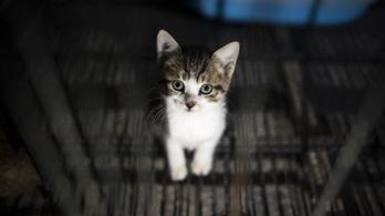 Improvizálva kell majd menteni a lusta adózók miatt a nehéz sorsú kiscicákat