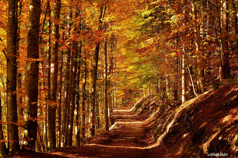 Ezektől a programoktól garantáltan jobb lesz az ősz