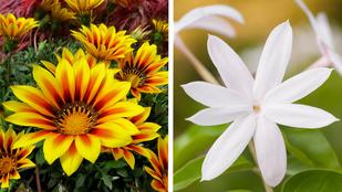 10 növény, amit még te sem tudsz megölni