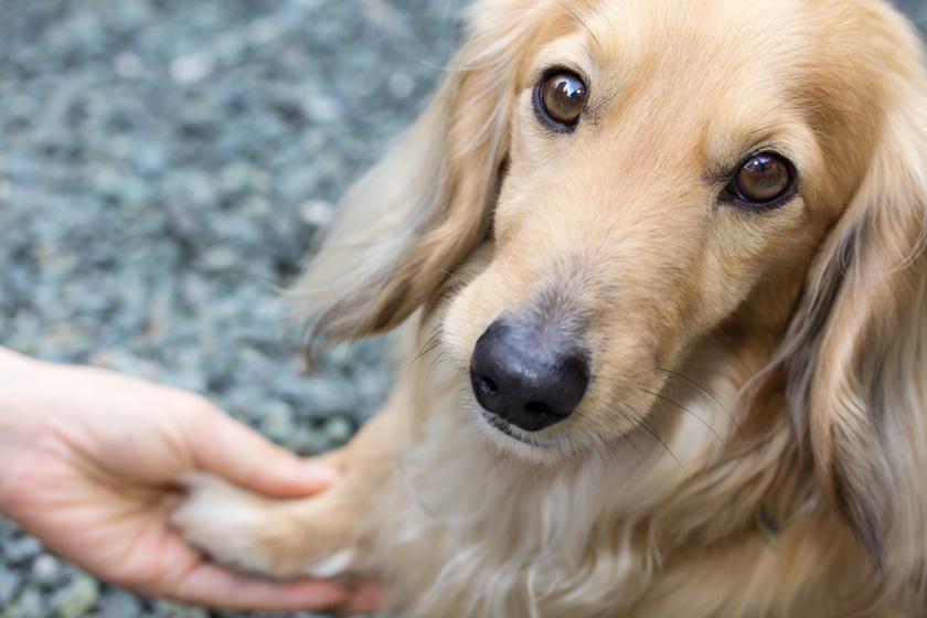 Adott egy maszatos pacsit a kutya: megható ötlete támadt tőle a gazdinak