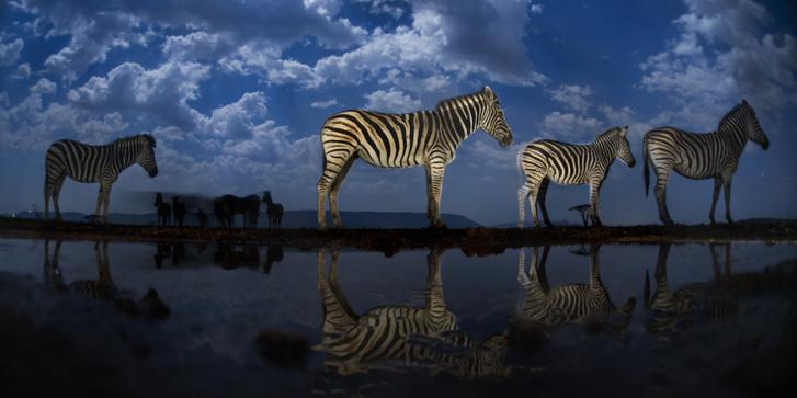 Máté Bence magyar természetfotós kiállítása kíséri a World Press Photo tárlatot a Néprajzi Múzeumben (Természet - 3. díj, sorozat)