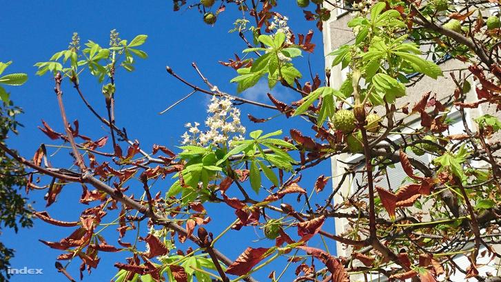 Tavasz és ősz egyszerre