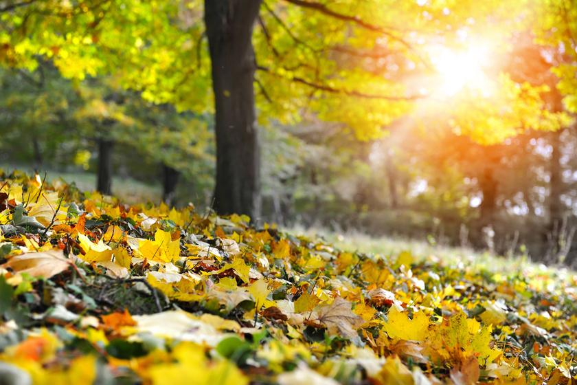 Akár 24°C-ot is hozhat az őszi napsütés: a vénasszonyok nyara lassan ér ide