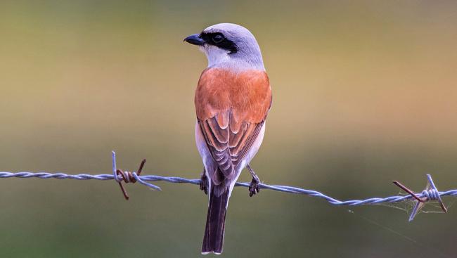 Segítsen nyomon követni a madarak őszi vonulását!