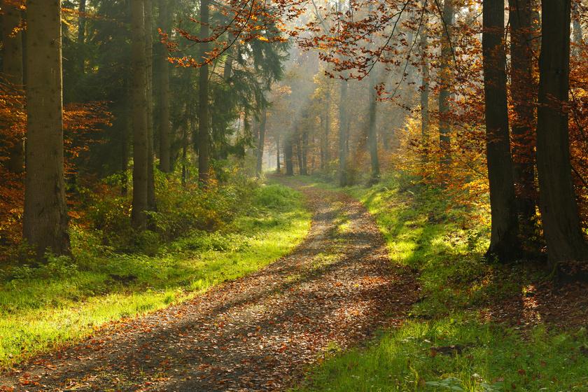 Gyűjtögetés az erdőben: egy rossz mozdulat, és máris 5 ezer forintról indul a büntetés