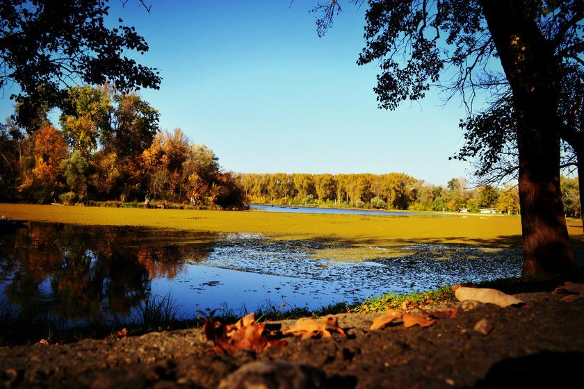 Hallottál már a morotvák vidékéről? A Holt-Tiszánál nincsen szebb ősszel