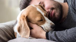 Rosszabul alszik, aki kutyástul bújik ágyba?