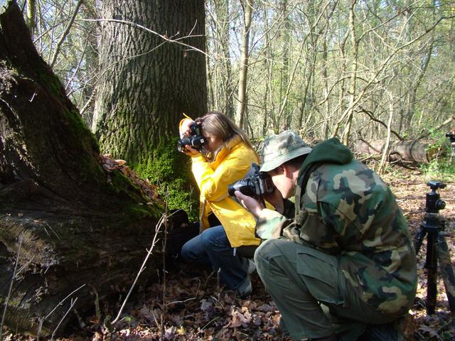 Munkában a természetfotósok az ártéri erdőben