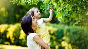 Élet a zöldben: a gyerek nyert egy kertet és vesztett egy apát