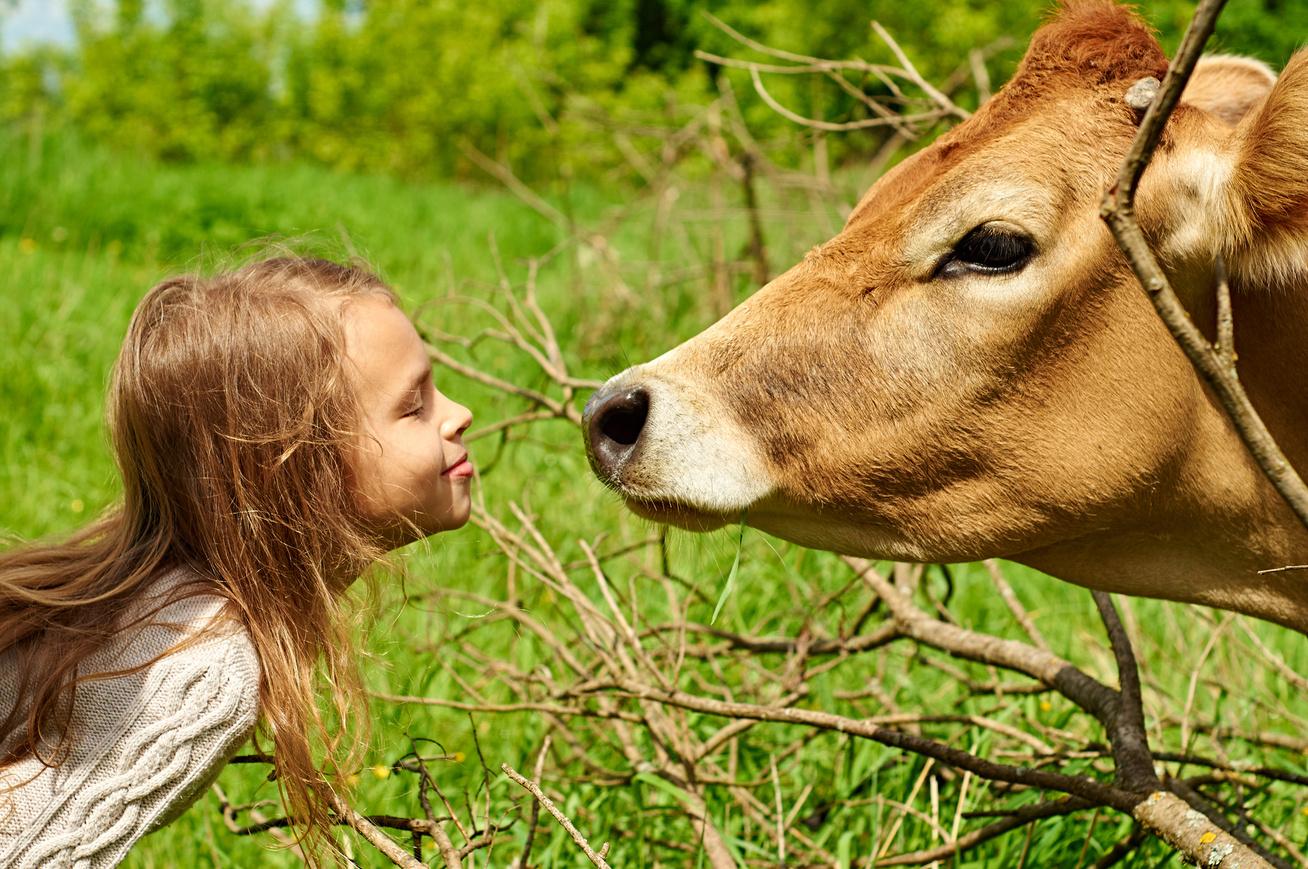 gyerek-kislany-allat-tehen-videk-farm