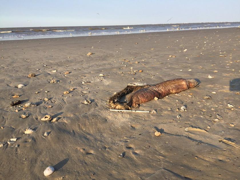Ez a bizarr látvány fogadta a katasztrófa sújtotta tengerparton végigsétálókat.