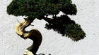 Én vagyok az Apád 5. - Orrmandulából óriás bonszai
