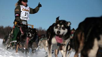Doppingolt kutyákat találtak a világ legnehezebb szánhúzó versenyén