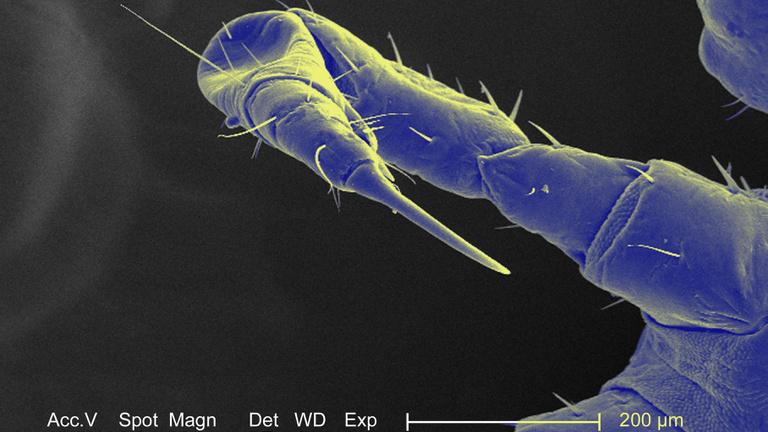 Már úton vannak hozzánk az új paraziták