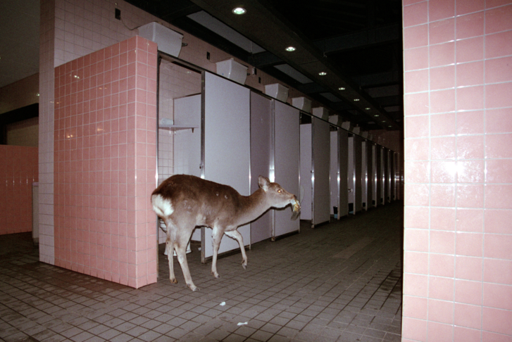 Untitled, gicleé print, Noguchi Town photo series, 2016, Japan