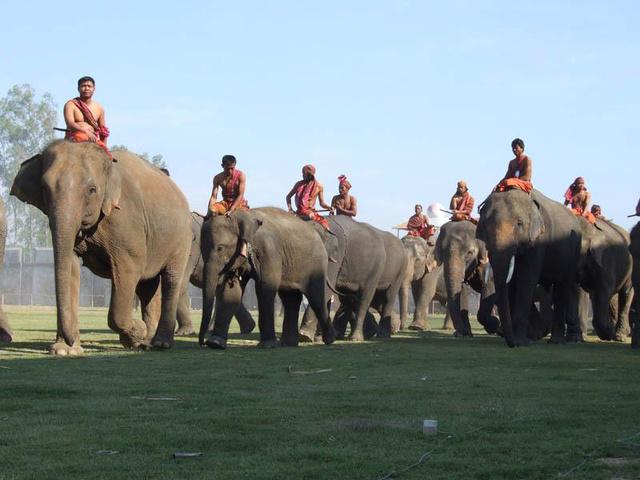 A surini elefántfesztivál