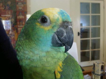 Ping Pong a papagáj (Forrás: Twitter)