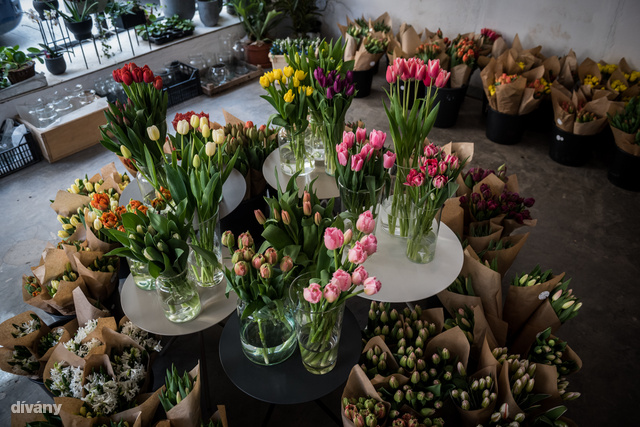 Ilyen sokféle tulipán közül válogathatsz.