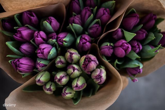 A lila három árnyalata.