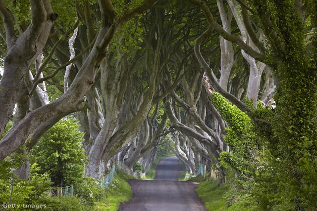 A Bregagh road névre keresztelt 18.századi fasort a világ egyik legszebb fasoraként tartják számon. Az HBO Trónok harca című sikersorozatából ismert szakasz au ÍR-sziget Angliához tartozó részén, az Antrim grófság területén, Ballymoneyban található.