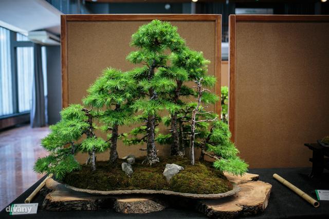 Persze nem minden tálba ültetett, kis termetű növény bonszai.