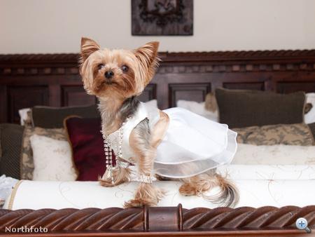 Ő nem a menyasszony, hanem Lulu, az egyik koszorúslány. Egy kis Swarovksi azért neki is járt