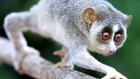 5 cuki állat, ami akár meg is ölhet