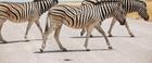 Vonalkódos zebraszkenner a könnyű azonosításért
